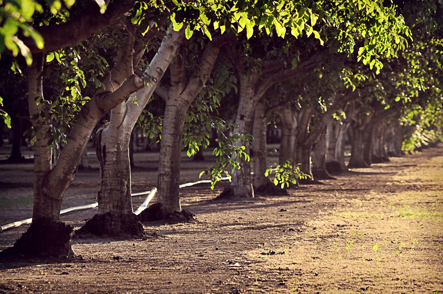 Горіховий сад