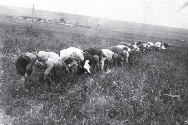 Діти збирають колоски, Донбас, 1934, hronika.info