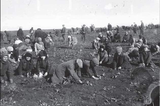 Саджання картоплі в полі, Донеччина, 1933, hronika.info