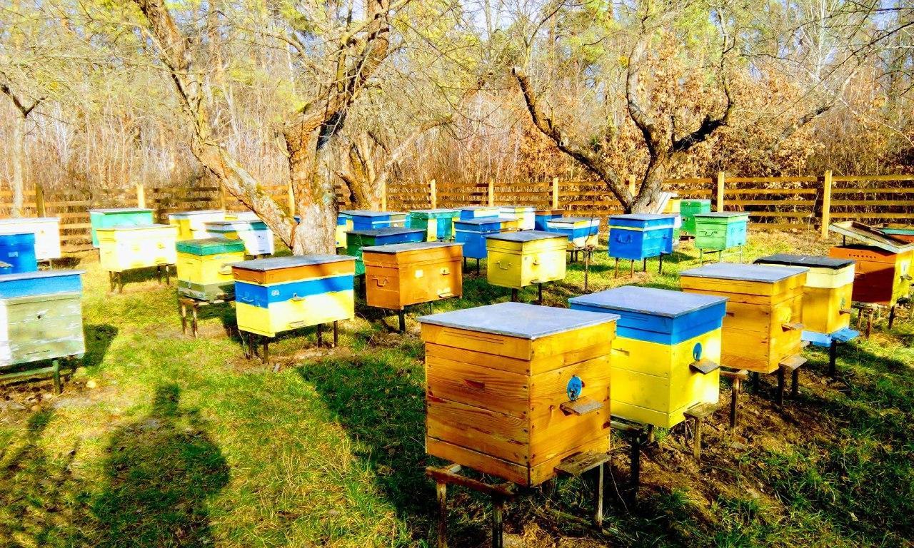 Пасіка Боярської станції бджільництва (facebook.com)