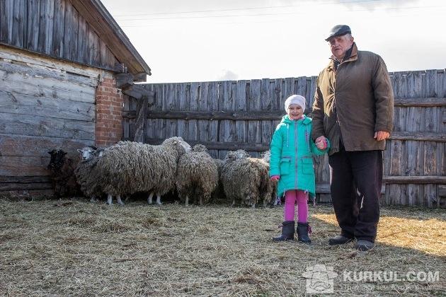 Іринка з дідусем показує журналістам їхні вівці