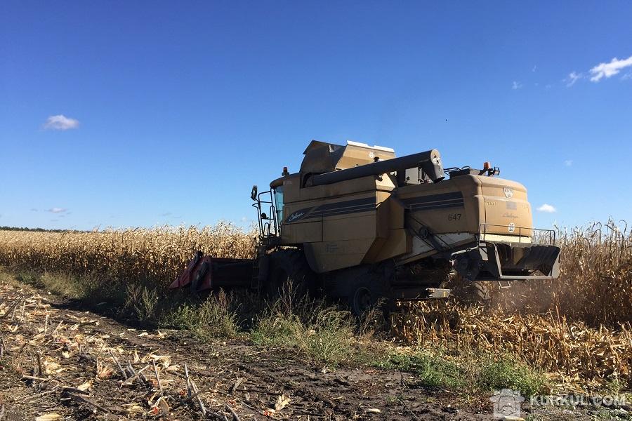 Збирання кукурудзи на дослідних ділянках