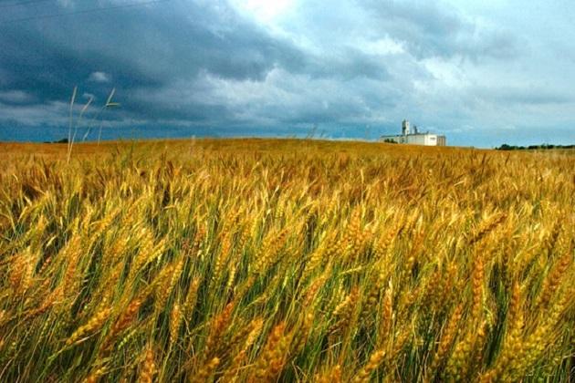 Технологічна ферма — наше майбутнє