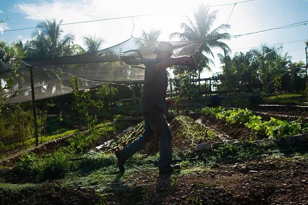 Фермер Еудалдо Гарсія обходить свої посіви на фермі Фінка Марта. Восьмигектарну органічну ферму було засновано чотири роки тому Фернандо Фунесом Монцоте поблизу Гавани