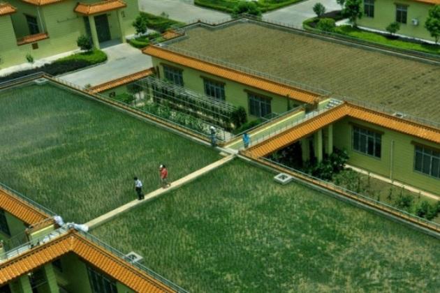 Ферма на даху броварні