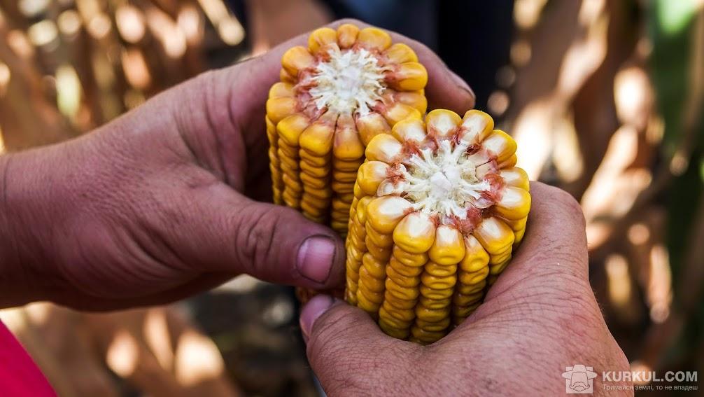 Качани кукурудзи