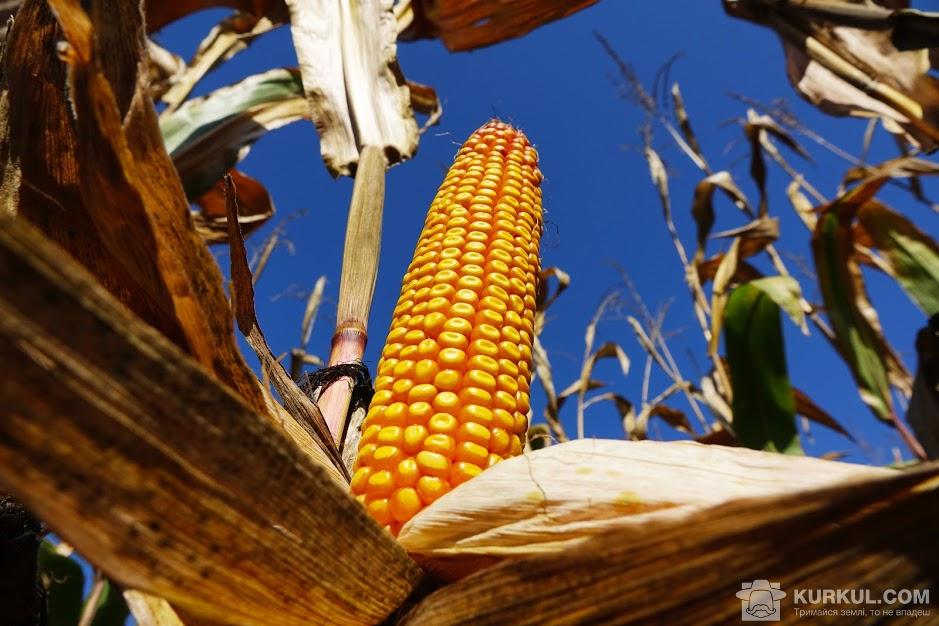 Гібрид кукурудзи Limagrain ЛГ 30254
