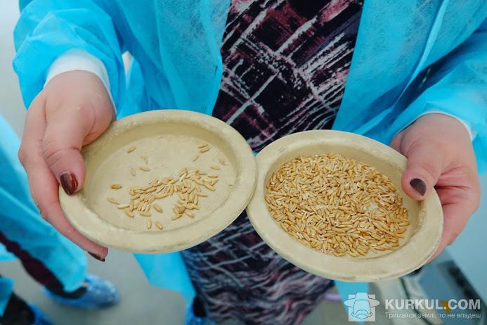 Проби зерна