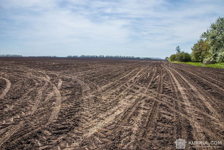 Кукурудзяне поле