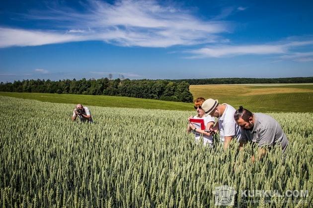 поле, пшениця 2017, агроекспедиція