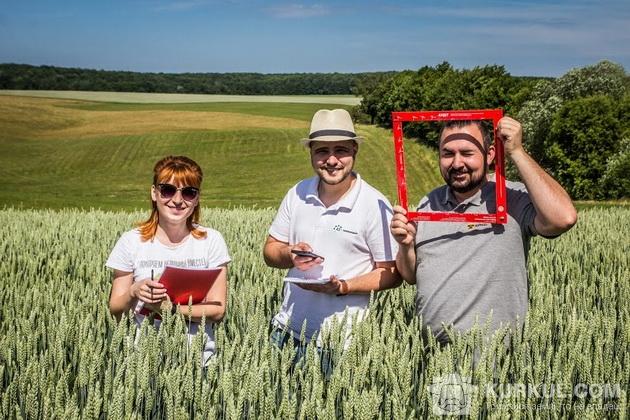 агроекспедиція 2017, пшениця, поле, урожайність, підрахунок