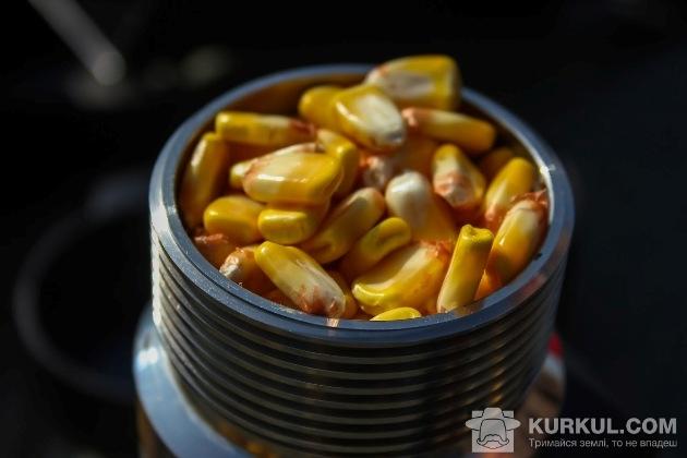 Вимірюємо вологість кукурудзи