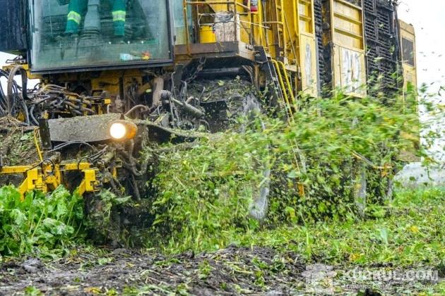 Копання цукрового буряку в «Агро ЛВ ЛТД»
