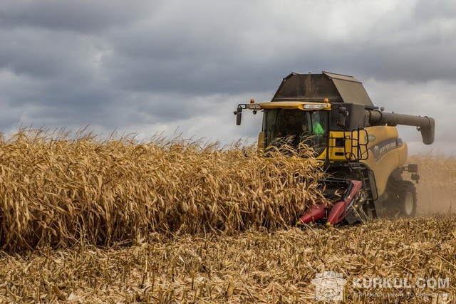 Збір кукурудзи