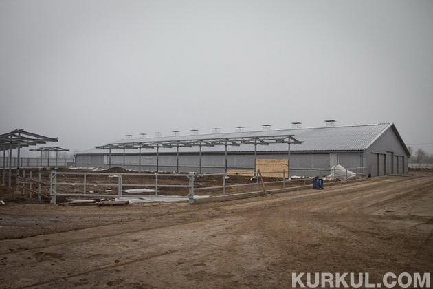 Будівництво корівників