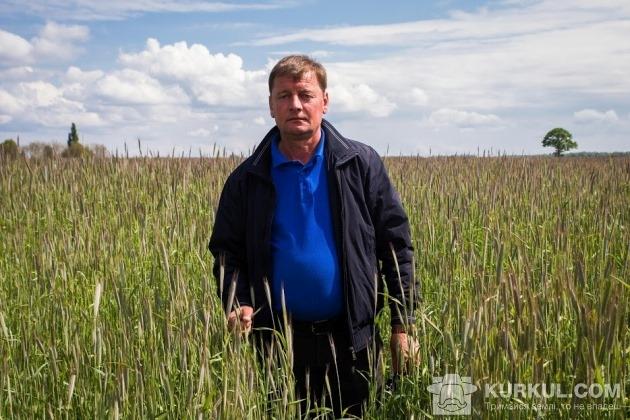 Директор підприємства Сергій Герез на житньому полі