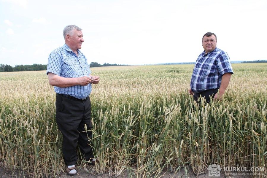 Директор СТОВ «Агрошляхбуд» Сергій Волкотруб разом з агрономом підприємства Олександром Лошаком