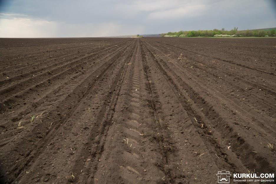 Поле господарства «Кириченко М»