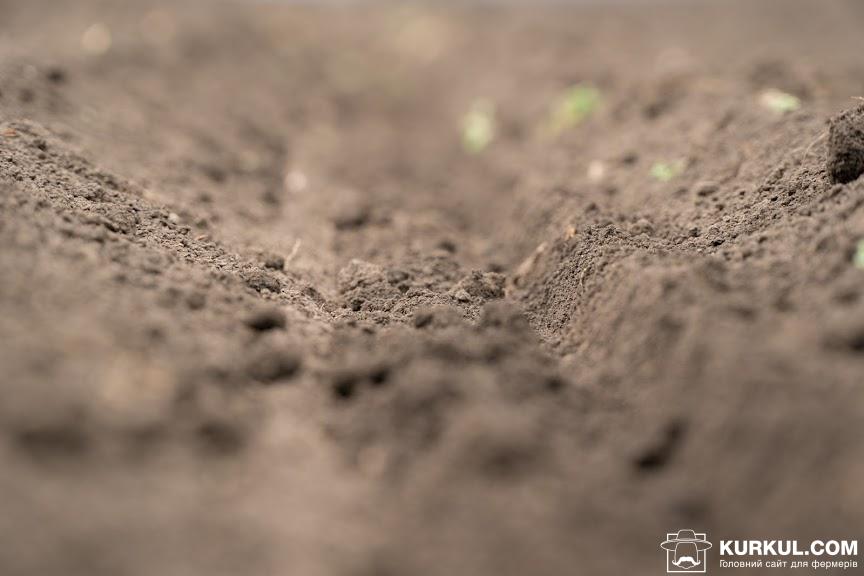 Грунт на полі господарства «Кириченко М»