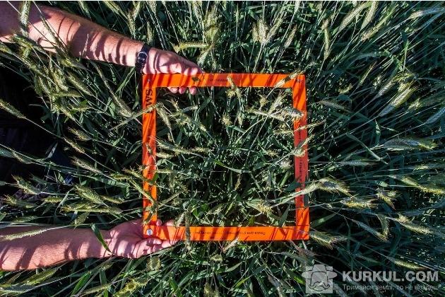 Озиме жито, вега агро, поле