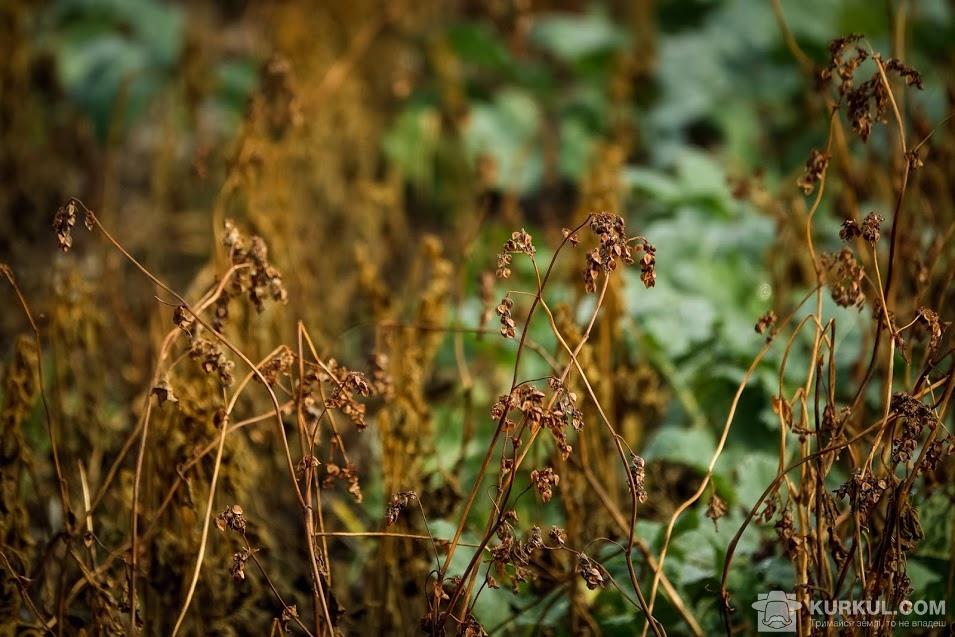 Пошкоджені рослини