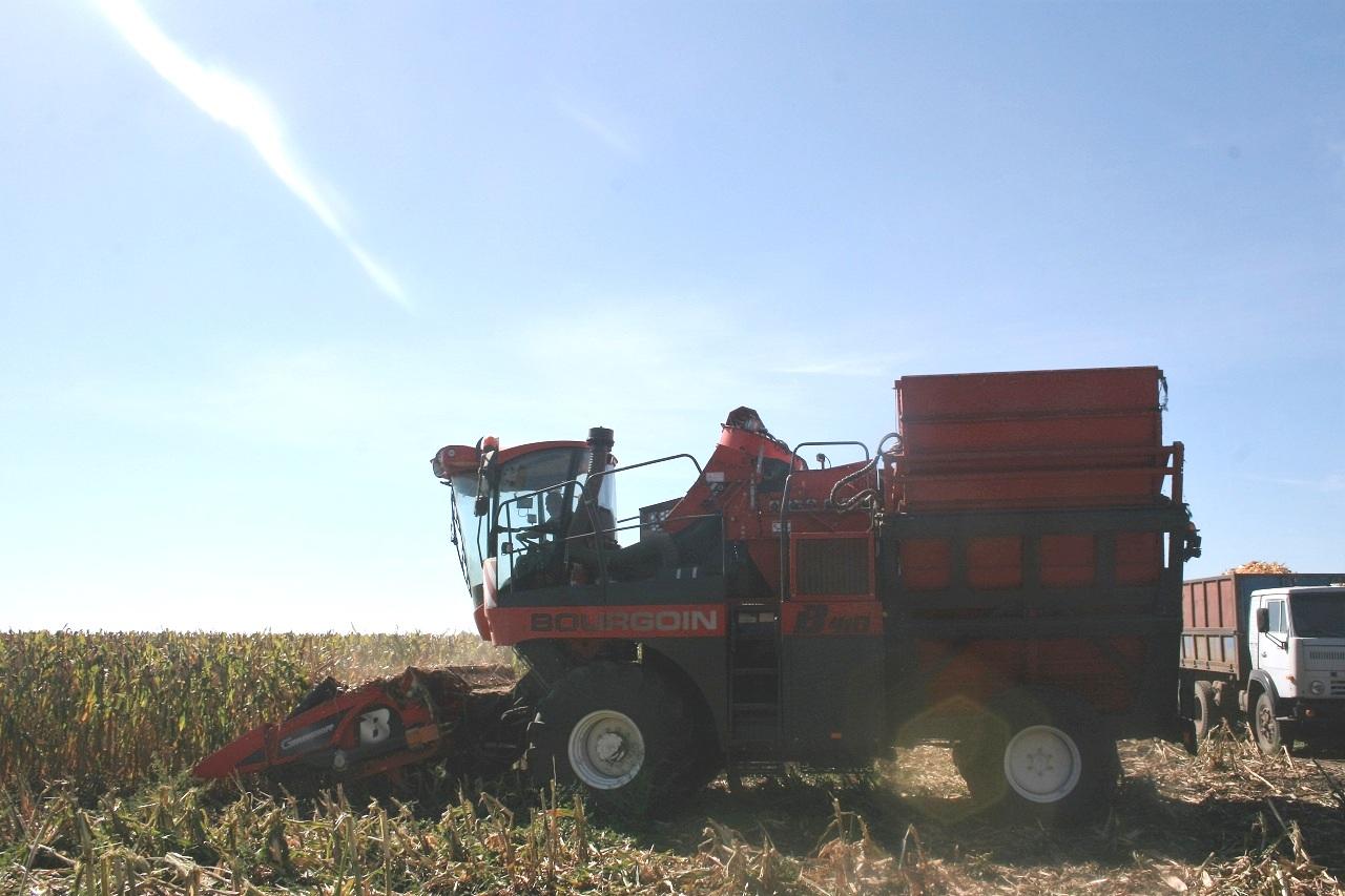 Збирання кукурудзи на насіннєвих посівах «Євраліс Семенс Україна»