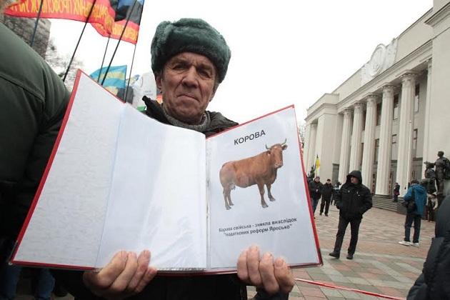 Корова — тварина, що тепер внесена до червоної книги, фото Геннадій Мінченко