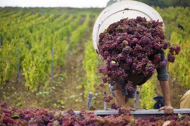Фермерам вкрай не вистачає робочої сили