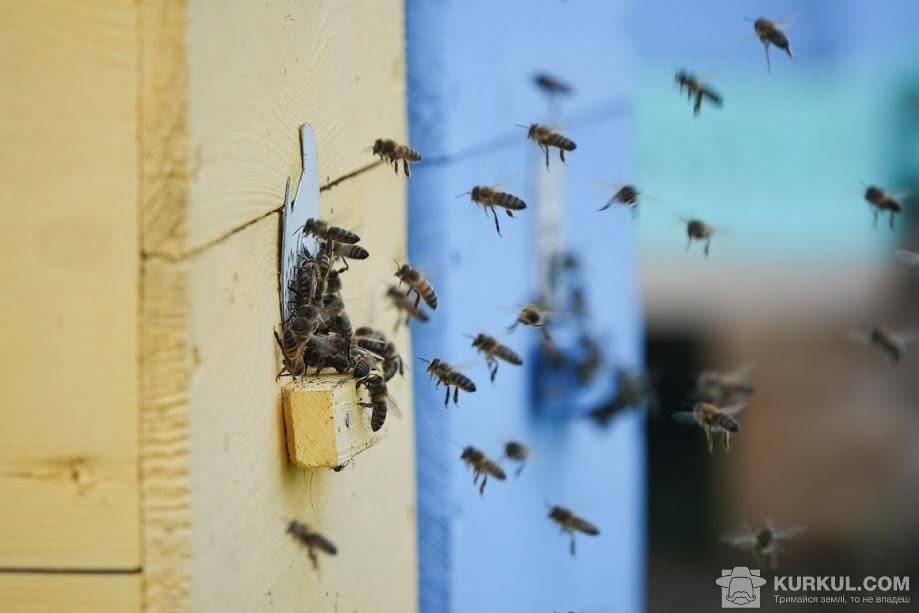 Бджоли, пасіка