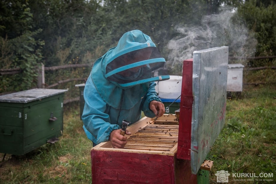 Honey-pasika-kurkul3.JPG