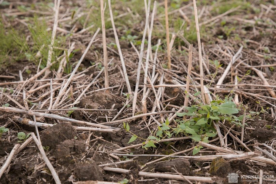 Поле, на якому буде посіяно пшеницю озиму