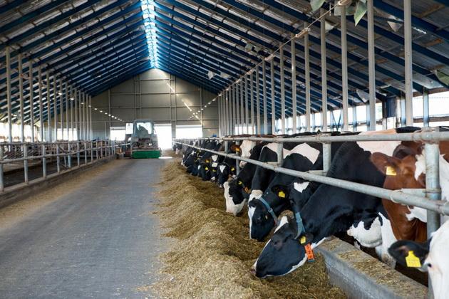 Годування корів