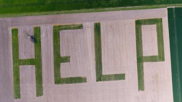 Прохання про допопмогу на пшеничному полі у Франції