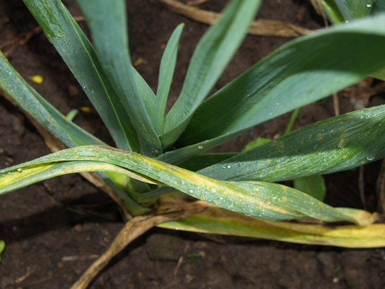 Ушкодження на листках