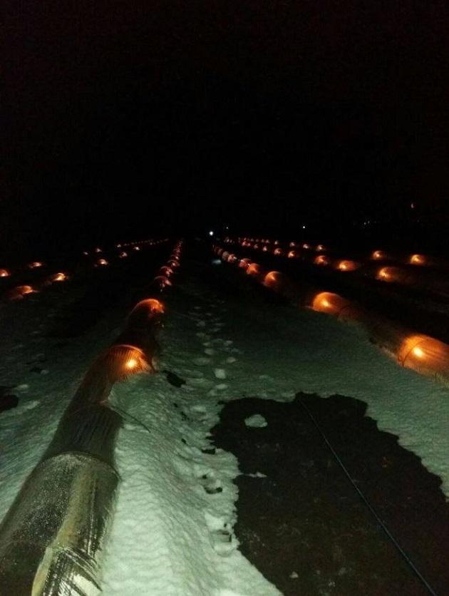 Свічки в тунелях гріли розсаду кавунів і динь на Одещині