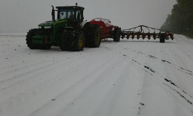 Сніг на полях Чернігівщини