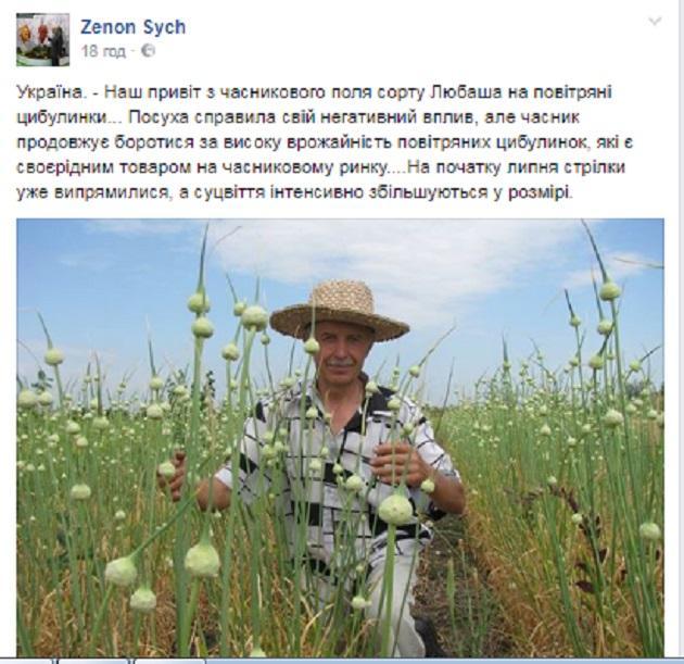 Зеновій Сич у полі часнику